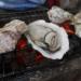 豊前海一粒牡蠣が食べられる『牡蠣小屋はちがめ』